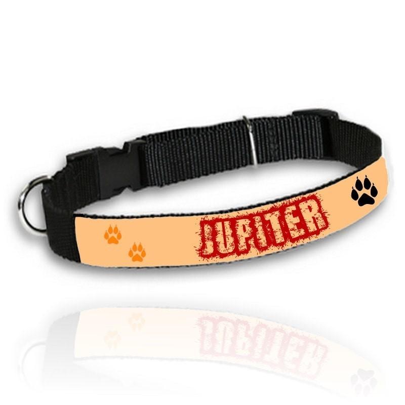 Collier personnalisé pour chien fond couleur